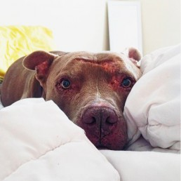 A dog lying on the bed.